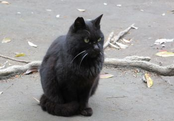 城山展望台の猫