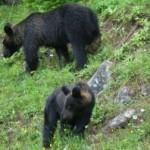 熊が頻出。山の側はマジで怖い