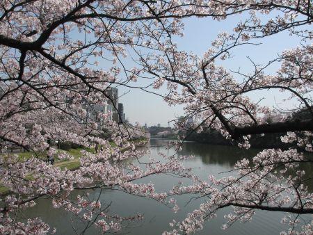 桜越しのお堀