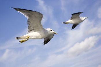 鳥のように自由