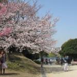 舞鶴公園・福岡城跡の桜