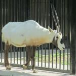 福岡市動物園・植物園に行ったよ その2