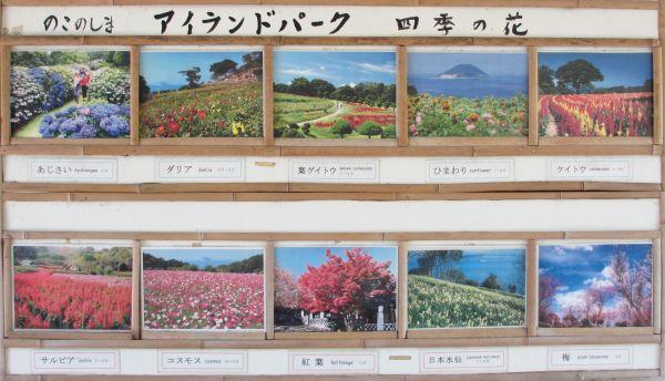 四季の花1