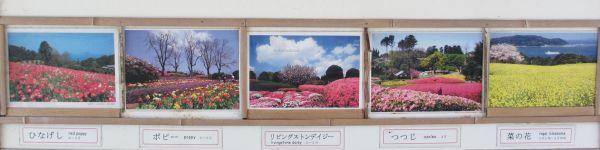 四季の花2