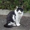 福岡市博多区の東公園には、にゃんと猫がいるとな