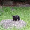 大濠公園の黒猫