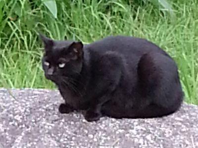 黒猫アップ