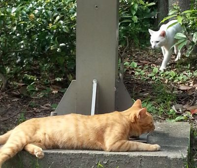 たしかに博多区東公園には何匹か猫がいた