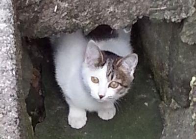 長崎一泊旅行の費用まとめと長崎の猫ちゃん