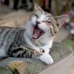 福岡の猫がいるシェアハウス