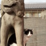 深志神社の猫