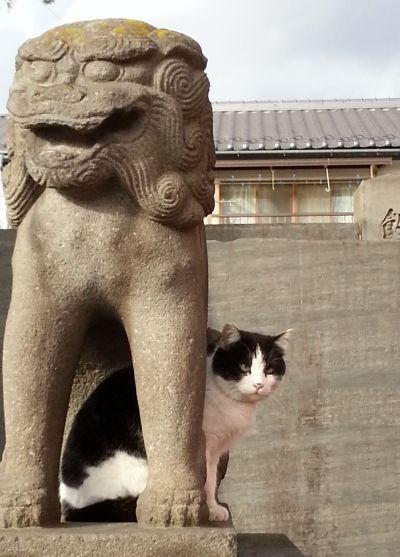 深志神社猫1