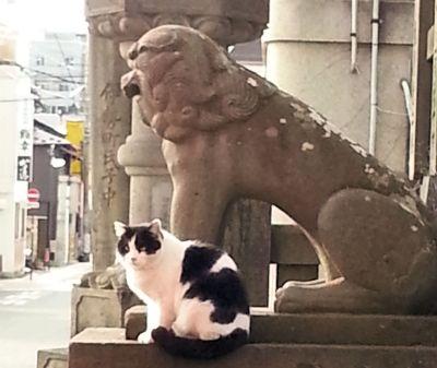 深志神社猫3