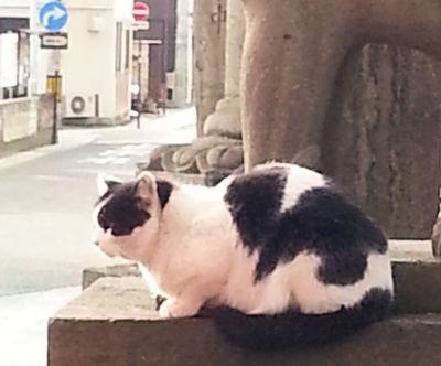 深志神社猫4