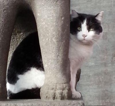深志神社猫2